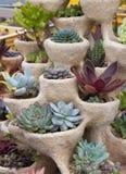 多汁植物庭院 库存图片