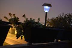 多汁植物开花、家庭阳台、花和被点燃的庭院灯,夜场面 库存照片