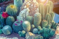 多汁植物或仙人掌与沙子石头和阳光背景 库存照片