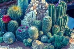 多汁植物或仙人掌在树市场上装饰和风景想法构思设计的 免版税库存照片