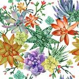 多汁植物无缝的样式 仙人掌种植水彩例证 皇族释放例证