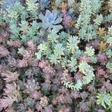 多汁植物是令人敬畏的 免版税库存图片