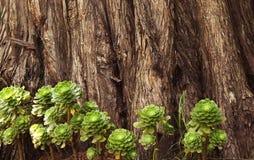 多汁植物有树词根纹理背景 免版税库存图片