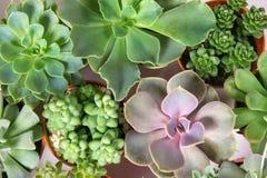 多汁植物的安排或仙人掌多汁植物、天花板或者上面 库存照片