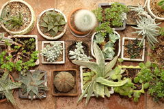 多汁植物的汇集在罐顶视图的 免版税库存照片