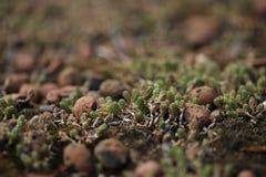 多汁植物的背景eco屋顶的 库存图片