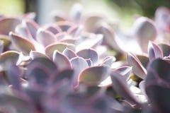 多汁植物的长方形安排; 免版税库存图片