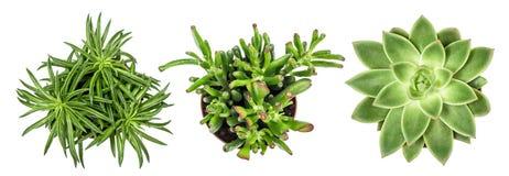 多汁植物种植白色背景顶视图 免版税库存图片