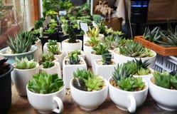 多汁植物种植罐 免版税库存照片