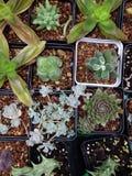 多汁植物种植罐 库存图片