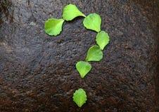 多汁植物问号石头背景没人 免版税图库摄影