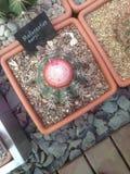 多汁植物(仙人掌)陈列在一个植物园里 库存照片