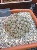 多汁植物(仙人掌)陈列在一个植物园里 免版税图库摄影