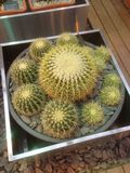 多汁植物(仙人掌)陈列在一个植物园里 免版税库存照片