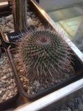 多汁植物(仙人掌)陈列在一个植物园里 免版税库存图片