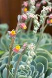 多汁植物 库存图片