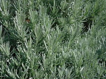 多汁植物3 库存图片