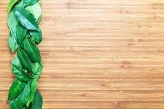 多汁绿色榕属在一个木切板留下连续说谎 自然有机概念 自然题材的背景 免版税图库摄影