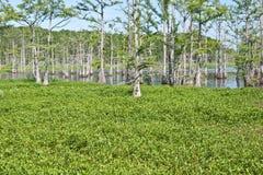 多沼泽的支流在夏天 免版税图库摄影