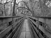 多沼泽的支流桥梁 库存图片