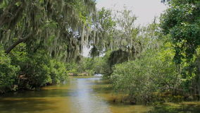 多沼泽的支流沼泽2 股票视频