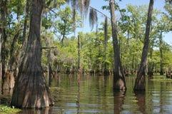 多沼泽的支流路易斯安那 免版税库存照片