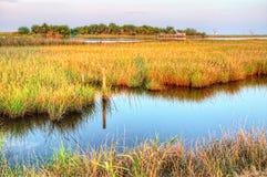 多沼泽的支流路易斯安那 免版税图库摄影