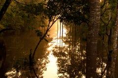 多沼泽的支流 免版税库存照片