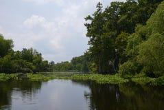 多沼泽的支流 库存照片
