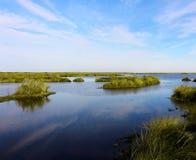 多沼泽的支流Sauvage 免版税图库摄影