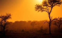 多灰尘的日出在南非 图库摄影