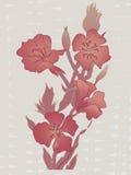 多灰尘的玫瑰色的花、藤和芽在柳条纹理 库存图片