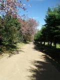 多灰尘的走的轨道通过森林 免版税库存图片