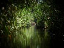 多瑙河三角洲,图尔恰,罗马尼亚 免版税库存照片