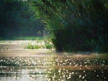 多瑙河三角洲,图尔恰,罗马尼亚 图库摄影