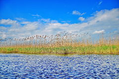 多瑙河三角洲与剧烈的天空的芦苇视图 免版税库存照片
