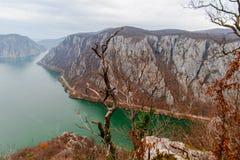 多瑙河峡谷树 库存图片