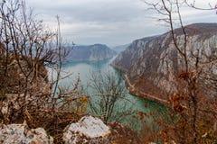 多瑙河峡谷树 库存照片