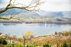 多瑙河的看法有葡萄园的, Durnstein 库存图片