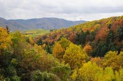 多瑙河银行的美丽的森林在Durnstein镇,奥地利附近的秋天 图库摄影
