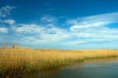 多瑙河Delta横向 库存照片