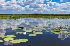 多瑙河Delta罗马尼亚 免版税库存图片