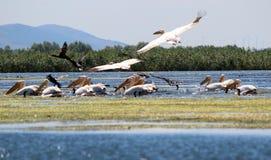 多瑙河Delta罗马尼亚 库存照片