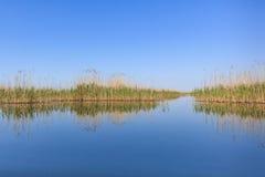 多瑙河Delta罗马尼亚 免版税图库摄影