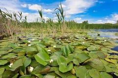 多瑙河Delta,罗马尼亚 库存照片