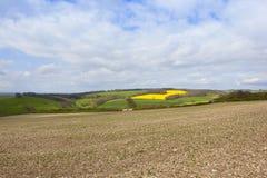 多白粉耕种的土壤 免版税库存照片