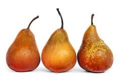 水多的成熟梨 免版税库存图片