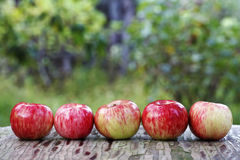 水多的成熟苹果 图库摄影