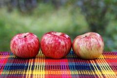 水多的成熟苹果 免版税图库摄影