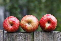 水多的成熟苹果 免版税库存图片